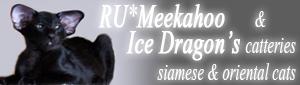 Meekahoo - Siamese & Oriental Shorthair Cattery